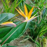 Bird of Paradise On Our Patio