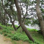 舞阪海岸の松林