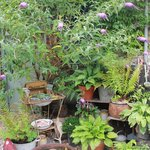 Some of the plants in the quirky garden