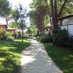bungalow nella pineta
