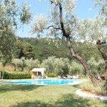 piscine entourée d'Oliviers