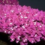 campana di fiori