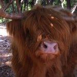 Jonquilles la vache de la maison!!!