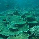 Tauchgang rund um Dhuni Kolhu - Korallen