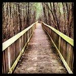 Nature Trail at Deering Estate