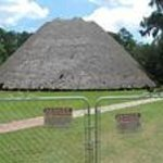 Thatch-roofed Apalachee Indian council house at Mission San Luis (being reroofed in summer 2013)