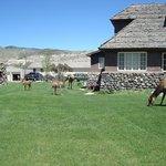 Elk nearby
