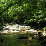 stroll along the stream