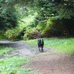 My dog enjoying his walk