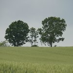 parent and child trees