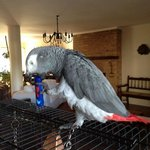 'Stoffel', the owner's cute and friendly parrot.