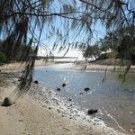 The stream at the south end of Mon Repos Beach. Sandflies !