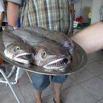 Hier kommt der Fisch frisch auf den Tisch