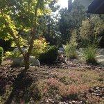 Le jardin de l'hôtel avec les deux chatons