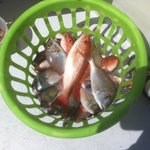 Our Catch...34 fish we can eat