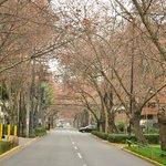Rua Callao - em frente ao Hotel - Simplesmente linda!