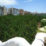 Vistas al campo de arboles frutales que rodea al hotel