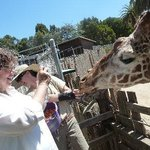 Quite an experience - eye to eye with a giraffe