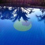 朝のプールに椰子の木のシルエット