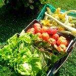 """grazie al """"metodo Manenti"""" il nostro orto ci regala prodotti ottimi e naturali"""