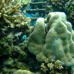 Reef Seen Aquatic Foto
