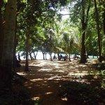 KYN big tree beach to be a resort
