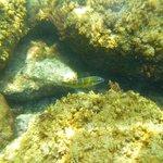 Un des nombreux poissons mutlicolores