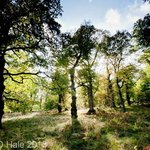 The Great Wood SSSI