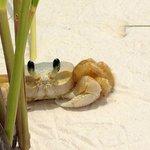 Crabe de sable à la plage