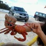 Foto de Barra de Tabatinga beach