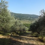 olive groves in front of agriturismo