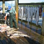 All 6 limited out! Halibut, rockfish and lingcod