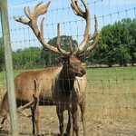Rosse Posse Acres Elk Ranch
