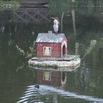 The duck house with a cormorant