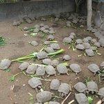 Lunch Time at Tortoise Breeding Center
