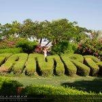 Scorcio dei giardini al Tamra Beach