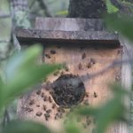 bees took over a bird box