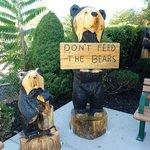 The Black Bears Greet You As You Arrive
