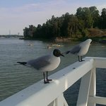 seagulls greeted us