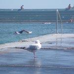 Swimmer & onlooking gull