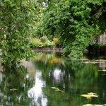 Carp pond in the Master's garden