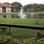 view from balcony with ducks passing by :-)