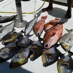 Our Catch