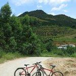 biking to Longjing