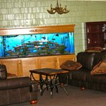 Beautiful fish tank. Owner feeds them every morning.