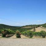 Montacino vineyard