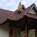 Massive bee hive at one of the bungalows