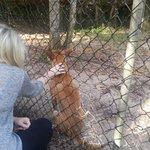 Dingo enjoying a pat!!