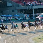 Live Harness Racing, May - September