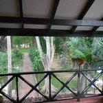 scimmia sulla veranda